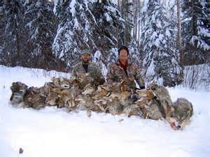 A disgusting Wolf Hunt, British Columbia, Canada Picture www.inzanaoutfitters.com