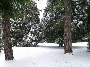 Winter Wonderland taken by Darren Greenidge