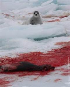 Picture courtesy of www.peta.org