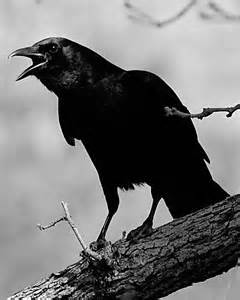 Call of the Crow