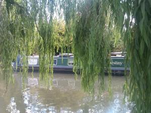 Weeping Willows, Berkhamsted, Herts taken by the author, Darren Greenidge
