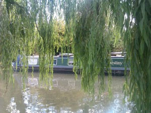 Weeping Willows, Berkhamsted, Herts taken by the author, Darren Greenidge
