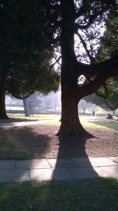 St Mary's Churchyard, Hemel Hempstead, taken by the author